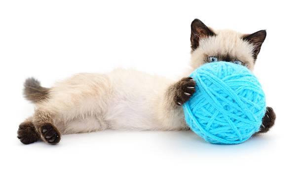 Cat with ball of yarn picture id479255332?b=1&k=6&m=479255332&s=612x612&w=0&h=jgpqgkpgxougw hgbwo91qokk woqyk2d qh1uma2jk=