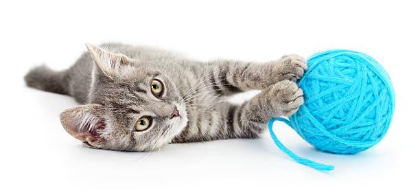 Cat with ball of yarn picture id496355742?b=1&k=6&m=496355742&s=612x612&w=0&h=zuaqv7wseg40o8wk26wco rgopq0mvnl1yomi4hmi0q=