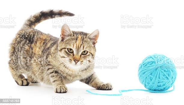 Cat with ball of yarn picture id533745763?b=1&k=6&m=533745763&s=612x612&h=pq7tcdvwce7kp4 fionsuvb9bi hd6zo iiyfd1oc9q=