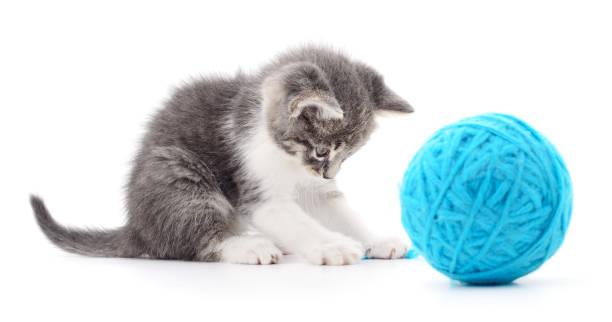 Cat with ball of yarn picture id654630514?b=1&k=6&m=654630514&s=612x612&w=0&h=xavbtzdhqukom2adgl9ys jzgkhvvvlc8ospjtrd46c=