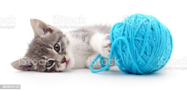 Cat with ball of yarn picture id663929102?b=1&k=6&m=663929102&s=612x612&h=3gscxmlz2mkgfiwq5bkp5izhpboonndykskqlgpyzhy=