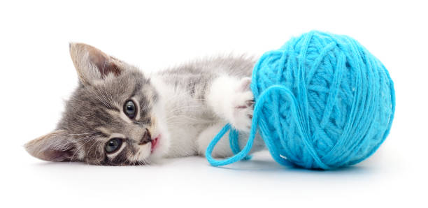 Cat with ball of yarn picture id663929102?b=1&k=6&m=663929102&s=612x612&w=0&h=hr1ugisifef5xr8ovycs9gaqcsckd96unmj1qlxsh0w=