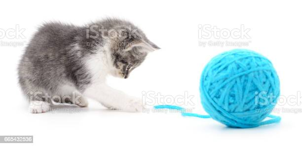 Cat with ball of yarn picture id665432536?b=1&k=6&m=665432536&s=612x612&h=95fay7pzffcbriowb e58movlb9zim7s jgcktblnlw=