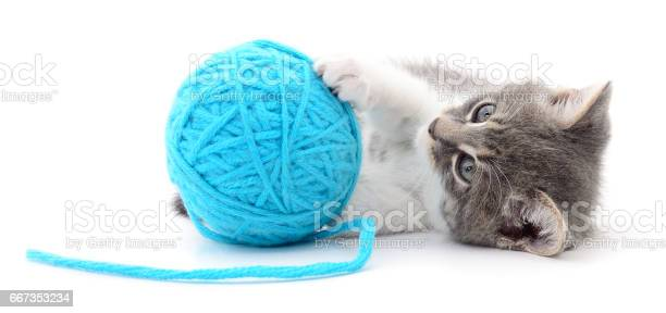 Cat with ball of yarn picture id667353234?b=1&k=6&m=667353234&s=612x612&h=pme1cf71 mf  od3csy12ksigppe6xa91ho75z7409y=