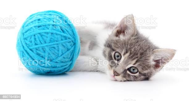 Cat with ball of yarn picture id692764934?b=1&k=6&m=692764934&s=612x612&h=34z0cknfccgmzarr7b0coqs0oxycysqjh 5epsy7ck4=