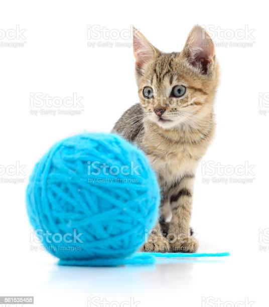 Cat with ball of yarn picture id861535458?b=1&k=6&m=861535458&s=612x612&h=bwnhvvxzkuj9xkz0qroka5ejcjm0d 9pqvwpqzl8lfo=