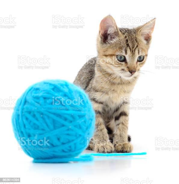 Cat with ball of yarn picture id863614394?b=1&k=6&m=863614394&s=612x612&h=y w1tgwtapcz qvi75td3mlzqgsa4ib2uq42bplvfxe=
