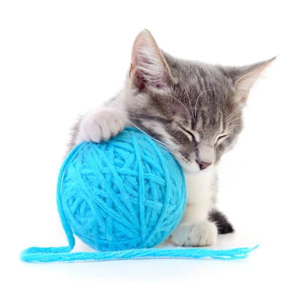 Cat with ball of yarn picture id900443668?b=1&k=6&m=900443668&s=612x612&w=0&h=ykhllbjqzlhnbohbqbt2gijhxxeluqjfxn9ewl9ckgi=