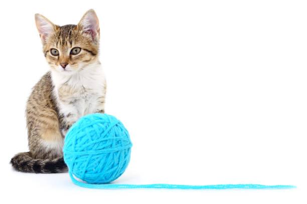 Cat with ball of yarn picture id912510508?b=1&k=6&m=912510508&s=612x612&w=0&h=fmxjp3rftjyswdrexndjozl9uacwfukplugvqxivite=