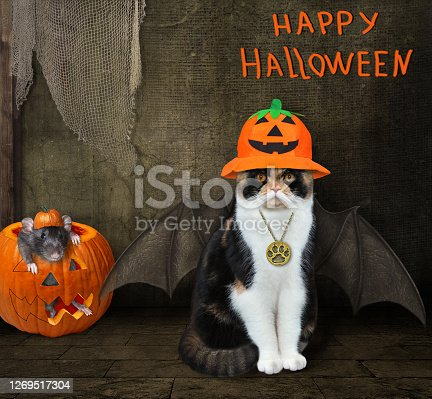 A cat in a witch hat with bat wings is sitting in an old barn. A black rat is inside a pumpkin. Happy Halloween.