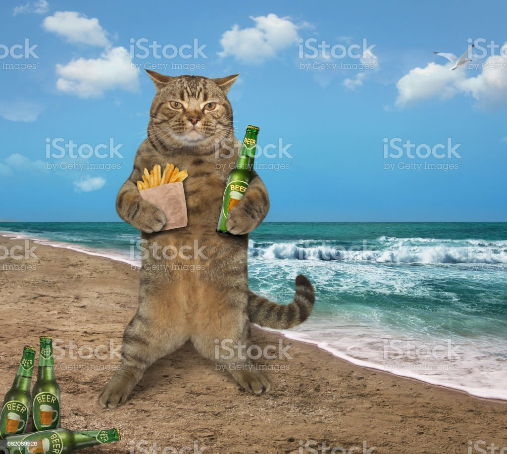 Cat with beer and potatoes on the beach bildbanksfoto