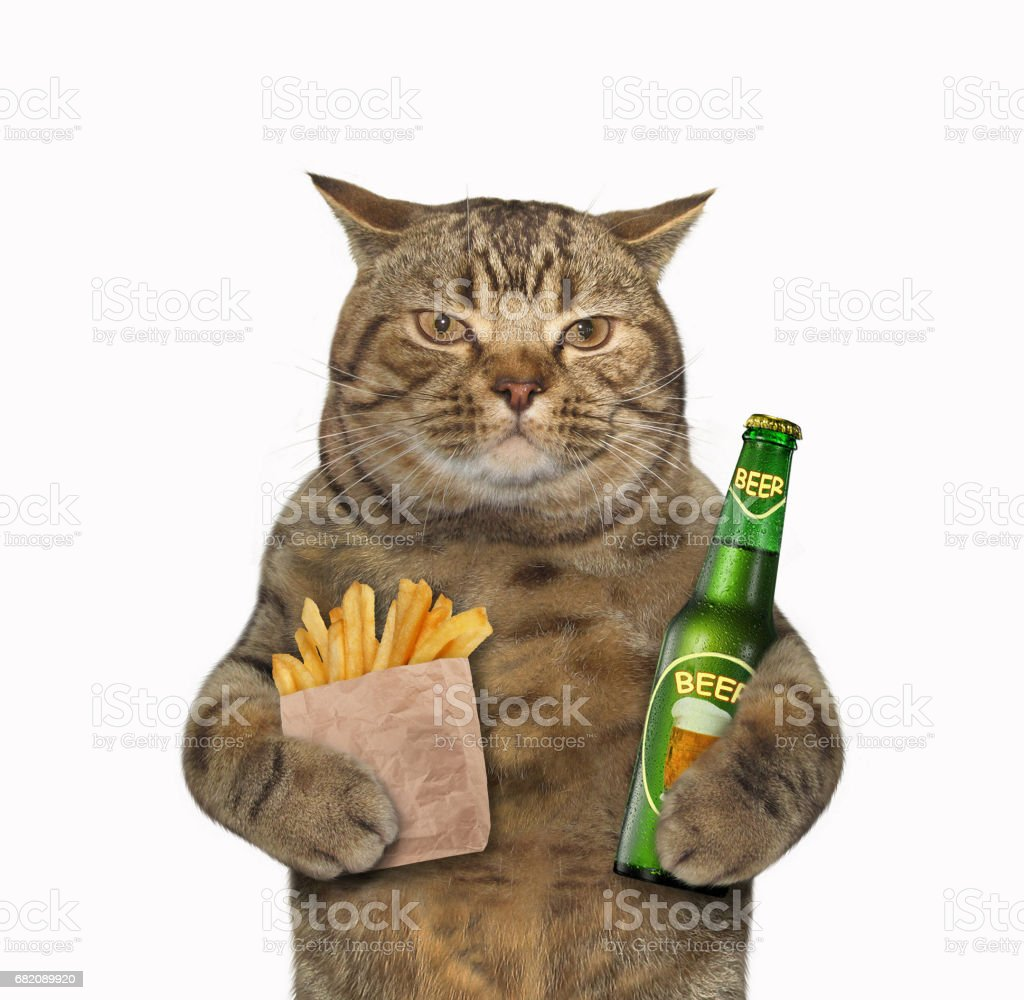 Cat with beer and potatoes stock photo
