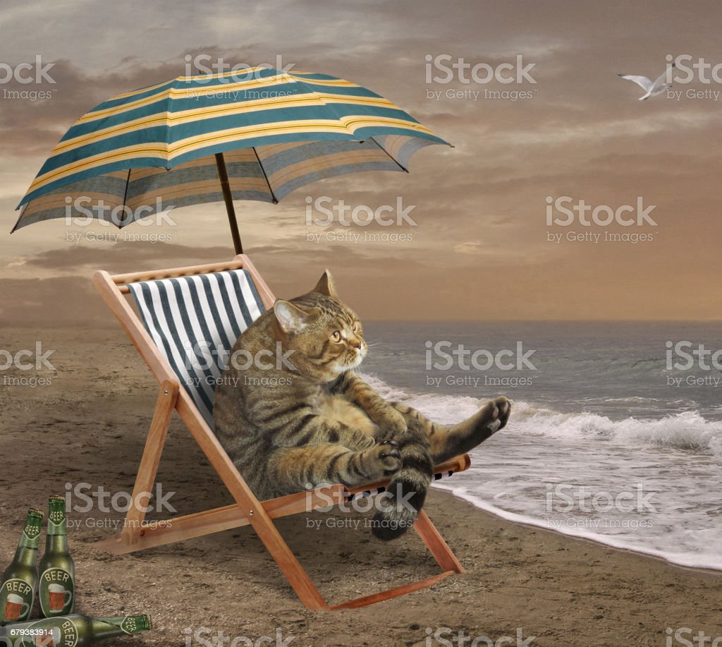 Cat with beer on the beach royalty-free stock photo
