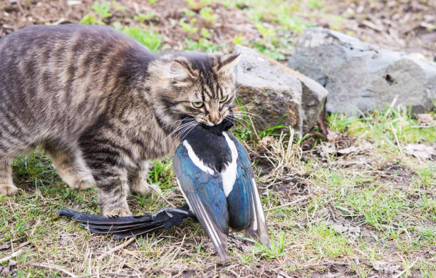 Cat with bird prey stock photo
