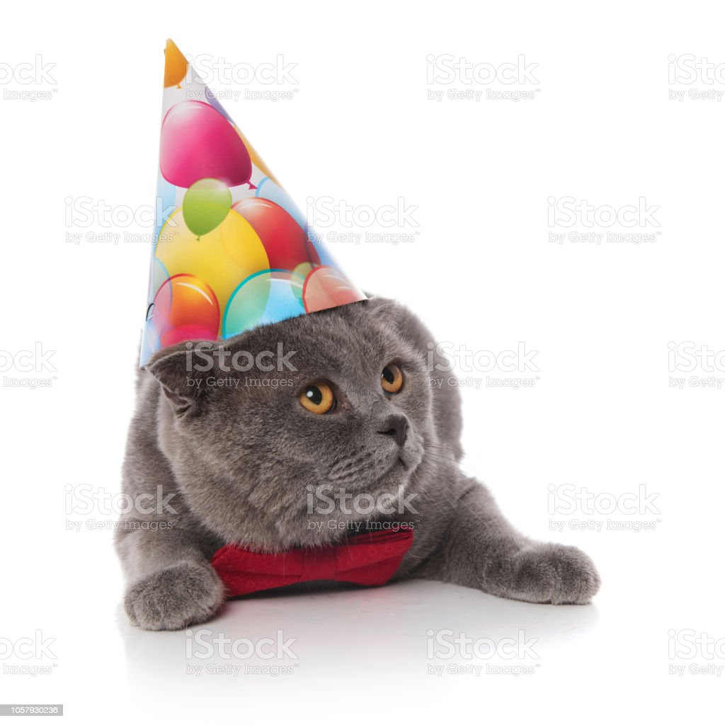 Cat With Birthday Hat And Bowtie Looks Up To Side