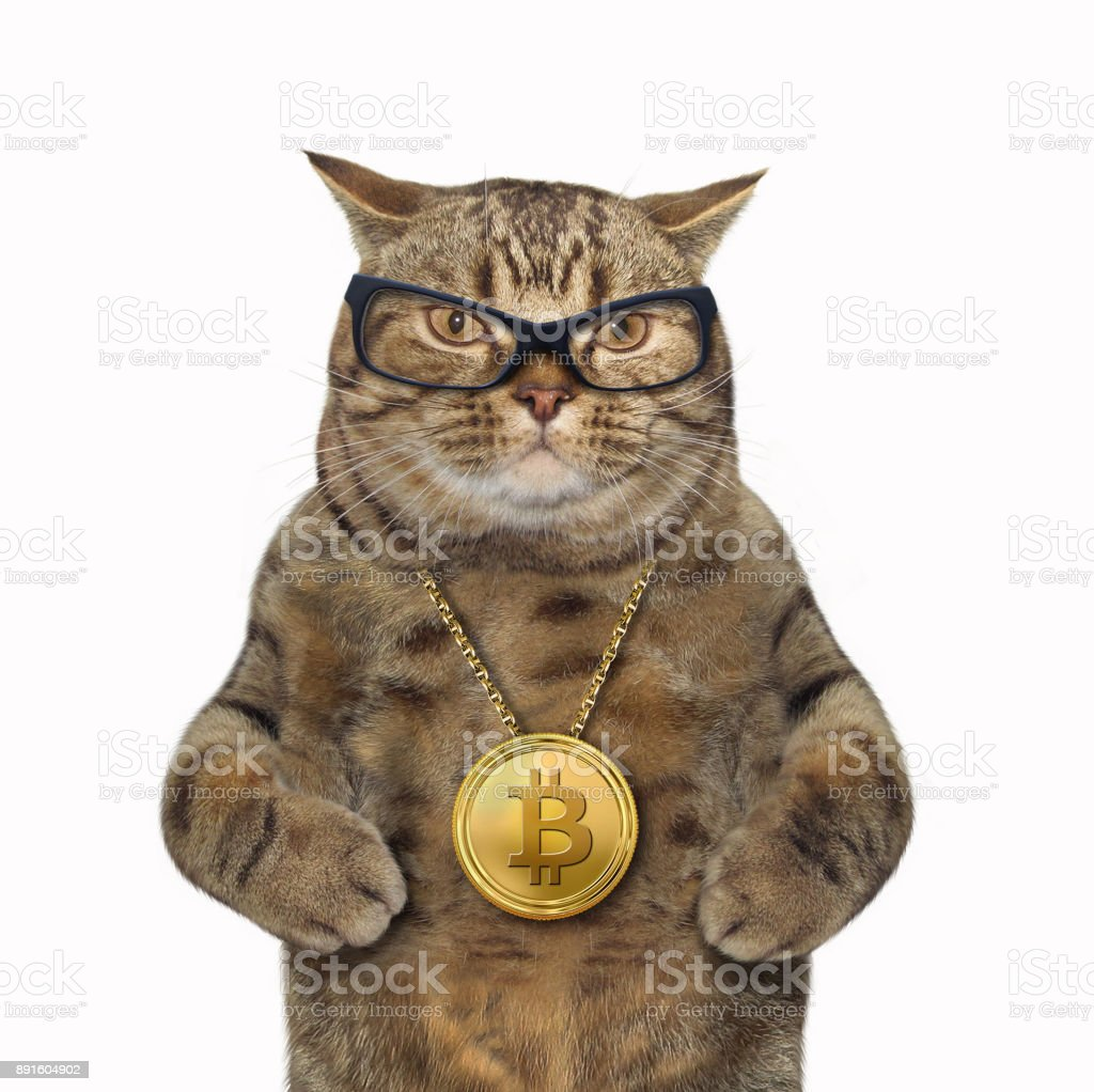 Cat with bitcoin medallion - fotografia de stock