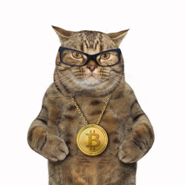 Cat with bitcoin medallion stock photo