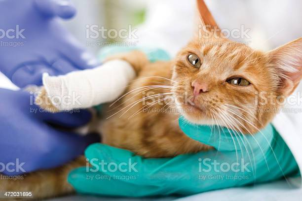 Cat with broken leg picture id472031695?b=1&k=6&m=472031695&s=612x612&h=dedswo4lbp9o5xwyu31oi1oed9y9ms0r4ct2sjwfvjy=