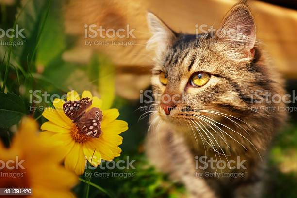 Cat with butterfly and flower picture id481391420?b=1&k=6&m=481391420&s=612x612&h=p0nzslivohfsg5akc9kfgcpvvfnkbp4wlmhdhczul6g=