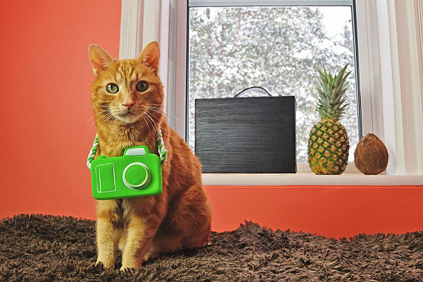 Cat with Camera Ready for a Tropical Vacation stock photo