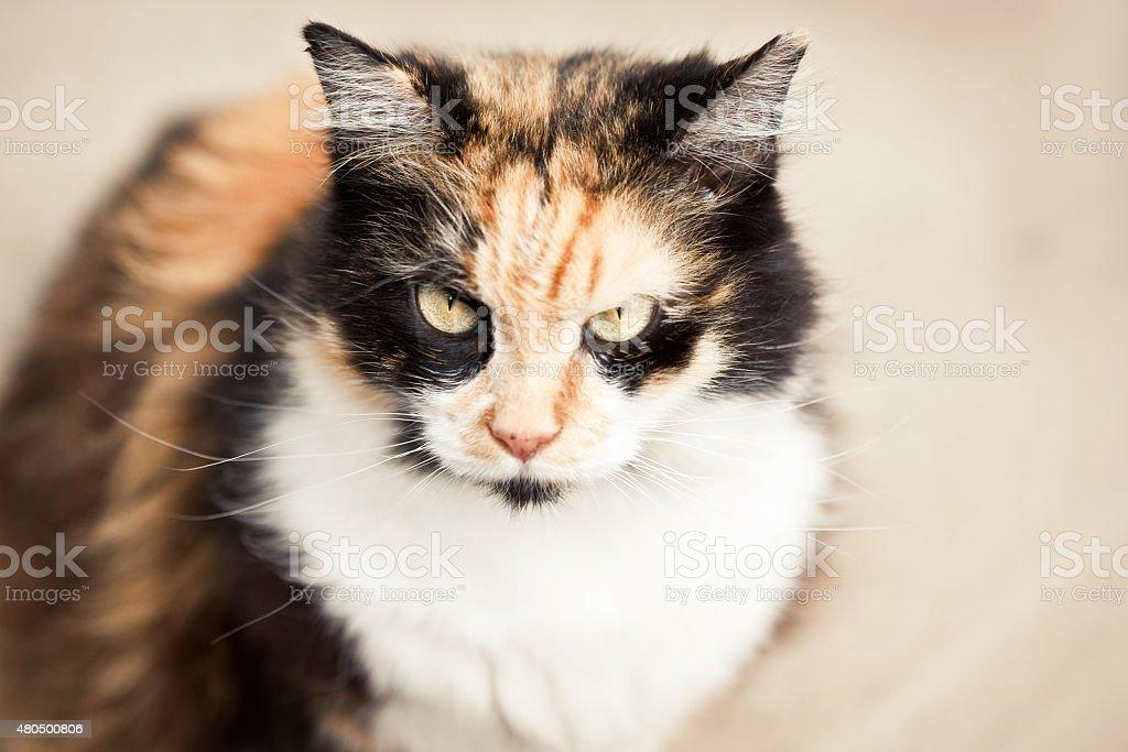 Cat With Cattitude stock photo