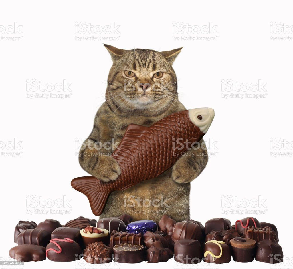Cat with chocolate 1 stock photo
