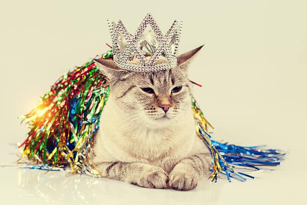 Cat with christmas decoration picture id492775280?b=1&k=6&m=492775280&s=612x612&w=0&h=q7yrbjmnwt29vdgkv8og65oytpfiqyb1  ivjidnydo=