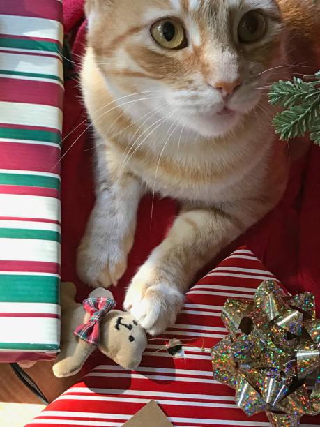 Cat with christmas ornament picture id1161240225?b=1&k=6&m=1161240225&s=612x612&w=0&h=rwyoubfgfwa84jd0uqoupy9nz57vgotwx2hqb6v0r6k=