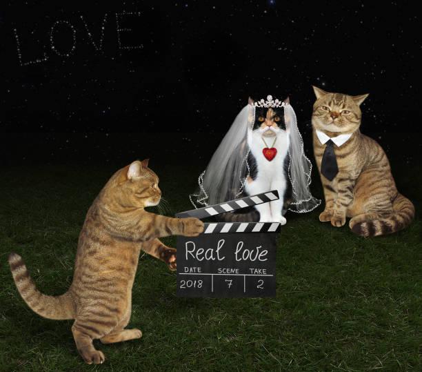 katze mit klappreinfall und brautpaare 2 - hochzeits thema hollywood stock-fotos und bilder