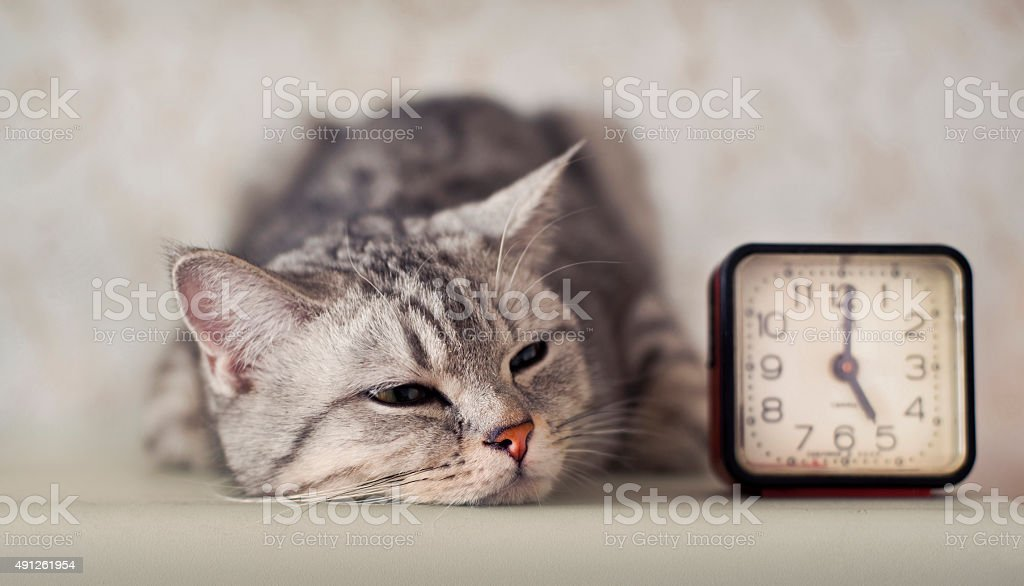 cat with clock stock photo