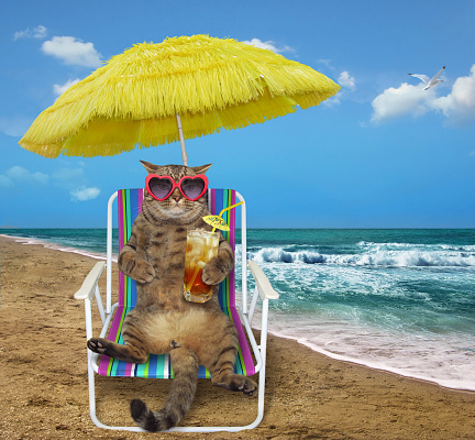 Cat with cocktail on a beach chair