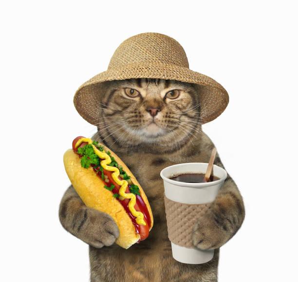 Cat with coffee and hot dog picture id826638940?b=1&k=6&m=826638940&s=612x612&w=0&h= bodmpha1wsq29rsntxsqg7jow69fryilgl7mflctpe=