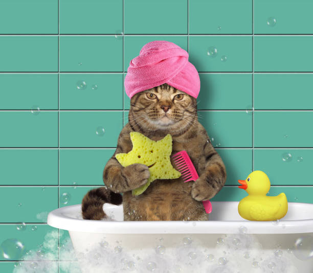 Cat with comb and bath sponge picture id909609800?b=1&k=6&m=909609800&s=612x612&w=0&h=t3nkuxhvgokfkdkg 5fgofemwfd7t2ygw54tapv24v8=