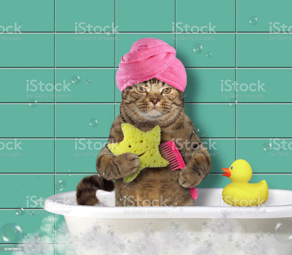 Cat with comb and bath sponge stock photo