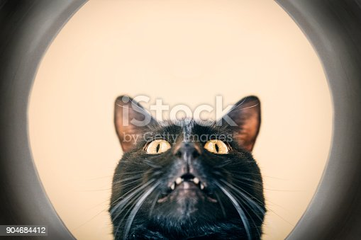 istock Cat With Face in Dish 904684412