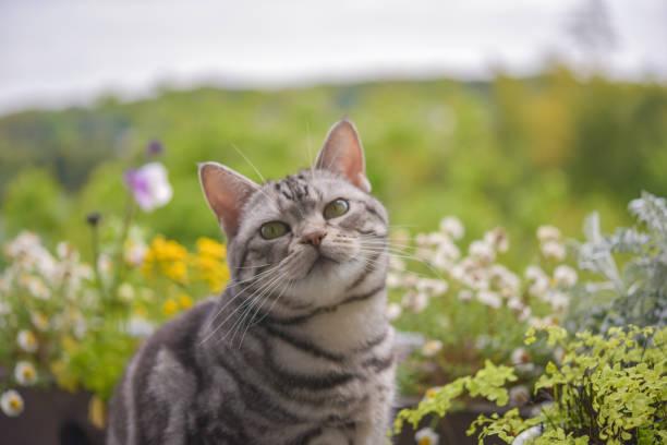 Cat with flowers picture id1216303579?b=1&k=6&m=1216303579&s=612x612&w=0&h=ks5pffbhvjyhmjnl4mnotskjudprtrgoj4745uhqjp0=