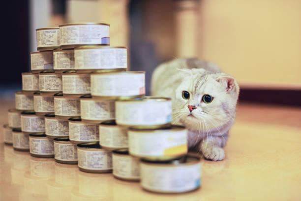 cat with food can - lata comida gato imagens e fotografias de stock