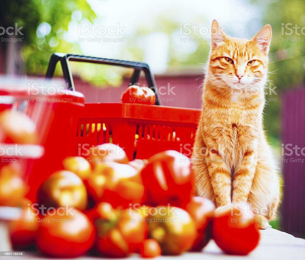 Cat With Fresh Tomatos royalty-free stock photo