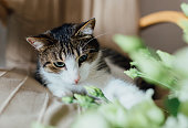 Flower, Domestic Cat, Animal, Bouquet, Dining Table