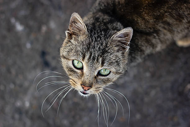 Cat with green eyes stock photo