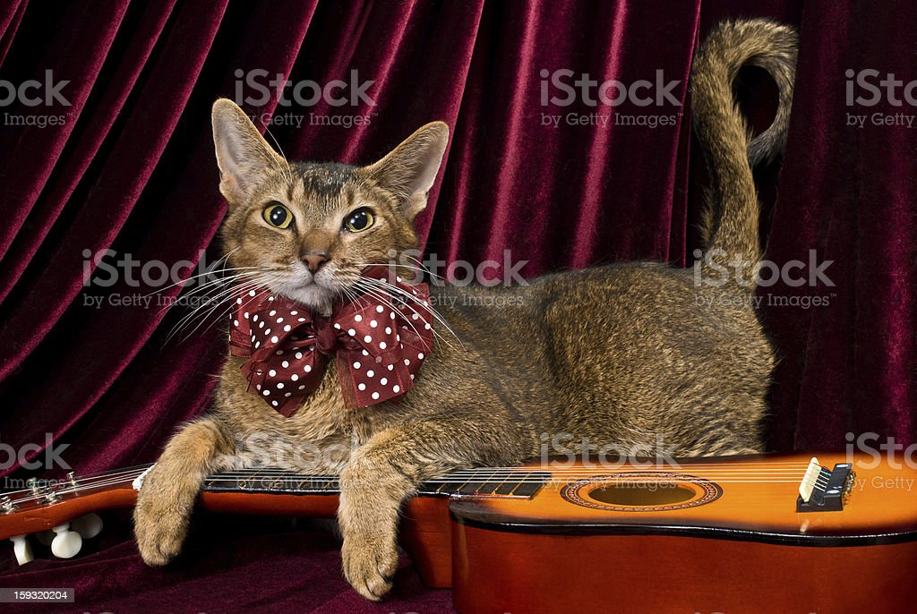 Cat with guitar in studio royalty-free stock photo
