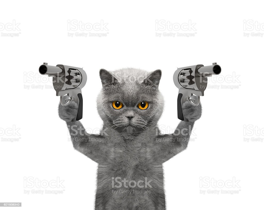 Cat with guns is murderer stock photo