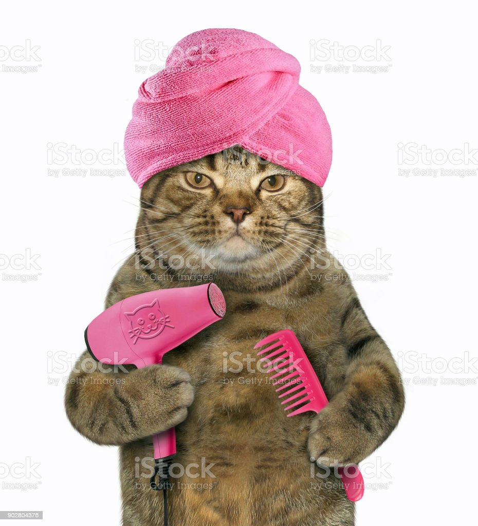 Cat with hair dryer and comb stock photo