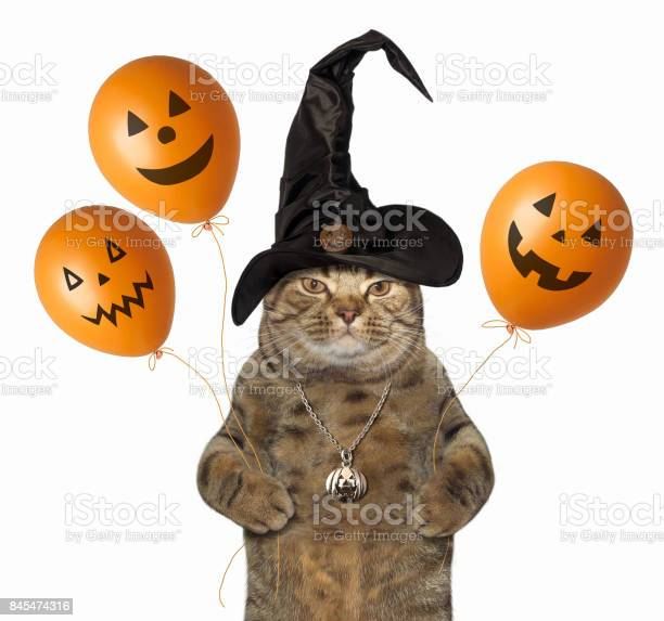 Cat with halloween balloons picture id845474316?b=1&k=6&m=845474316&s=612x612&h=gdsd9dbmlhugatokn1dg15vdfx60 2jmngt sgrrtle=
