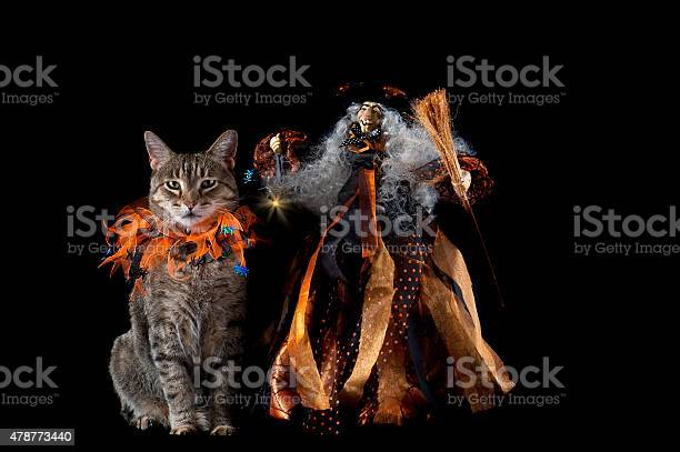Cat with halloween collar next to smiling witch picture id478773440?b=1&k=6&m=478773440&s=612x612&h=w mrolutn2zmdqxtrorekop5lx2yqvkqx1gdo3xmvvu=