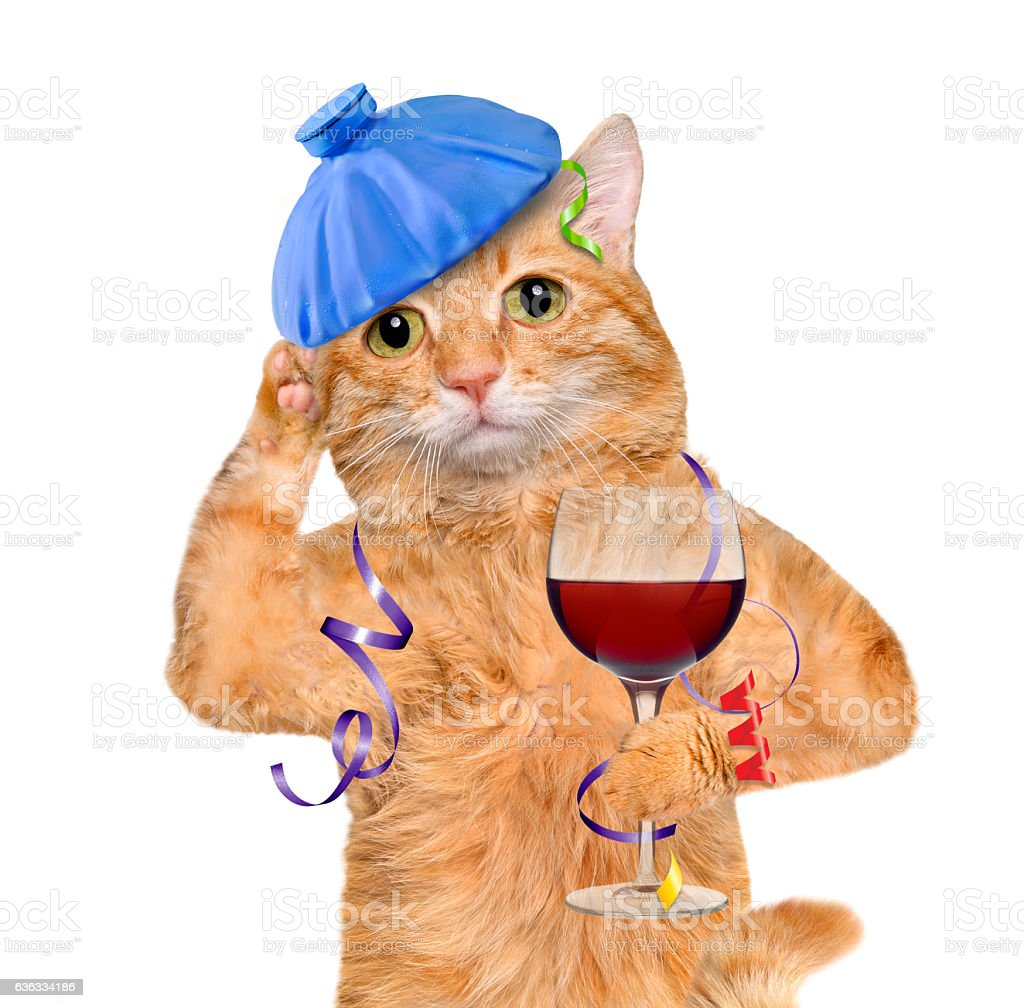 Cat with hangover is holding a glass of wine. stock photo