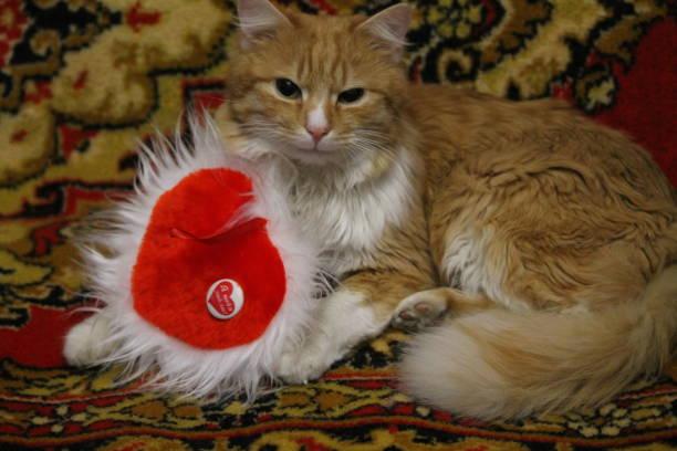 Cat with heart picture id1132781092?b=1&k=6&m=1132781092&s=612x612&w=0&h=35bngaulslxg1o0lkx3f94inrnalgptbsz5k5un ar4=
