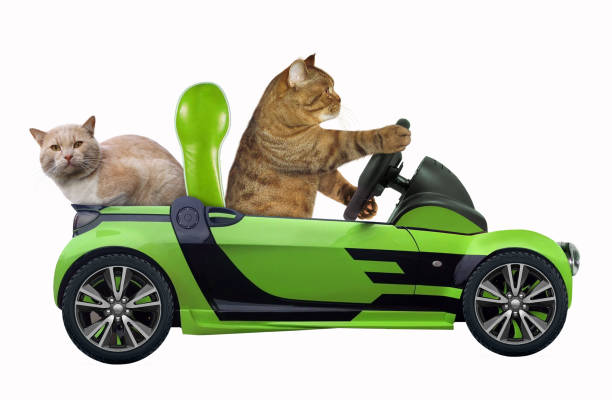 Cat with his friend in the green car stock photo