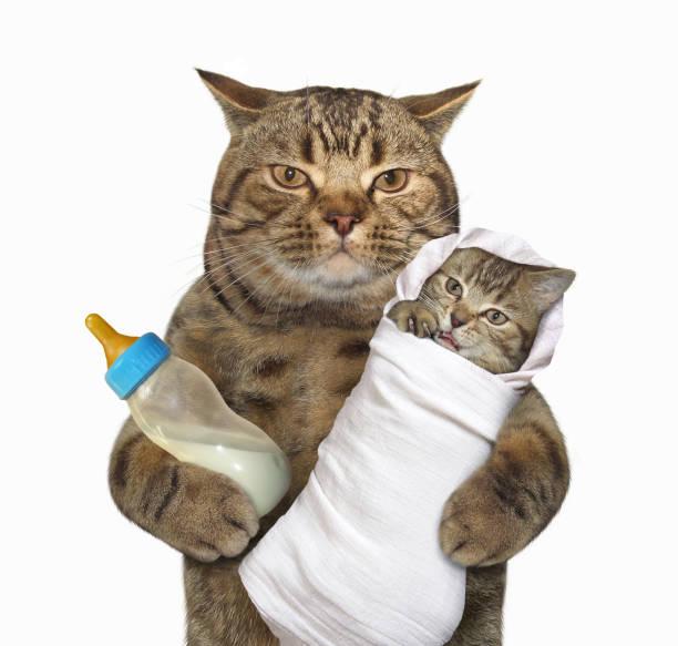 Cat with his kitten picture id942154632?b=1&k=6&m=942154632&s=612x612&w=0&h=dppdbswrlipxefr25sd4ybpl2bnhdztfheq2 lbakm0=