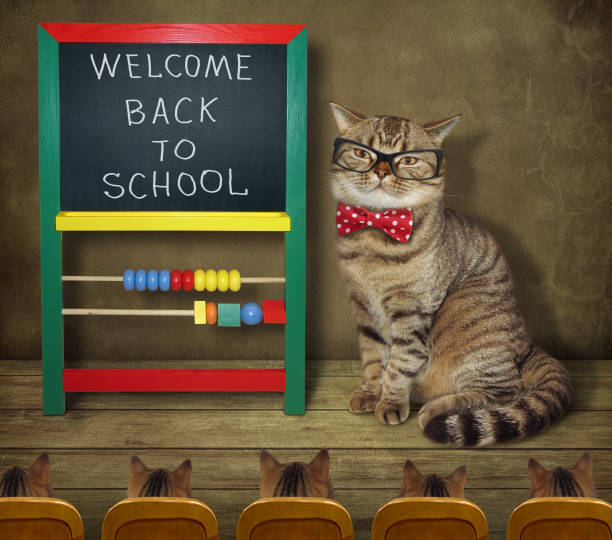 Cat with his students stock photo